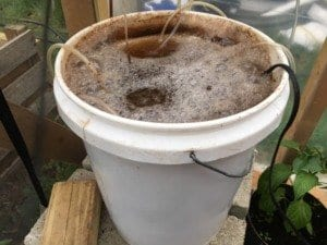 benefits of compost tea