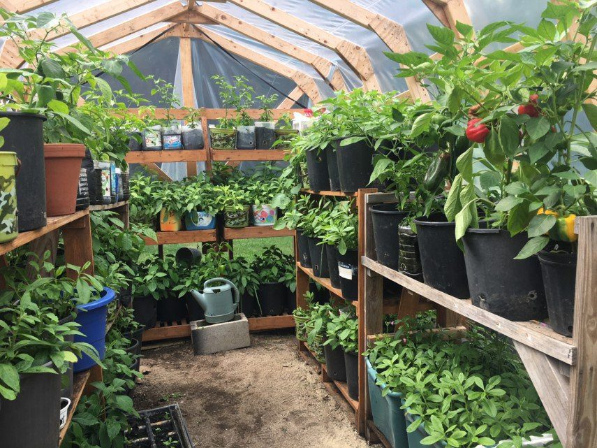 Growing Vegetables in a Greenhouse