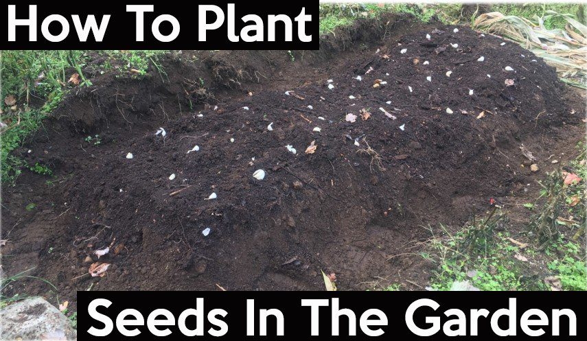 how to plant seeds in your garden 2