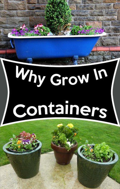 why grow in containers