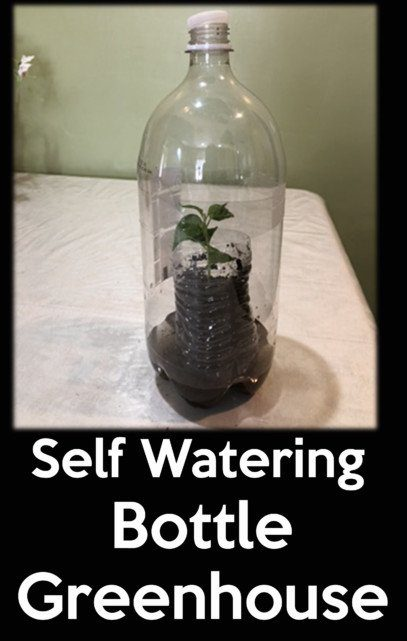 self watering Bottle greenhouse