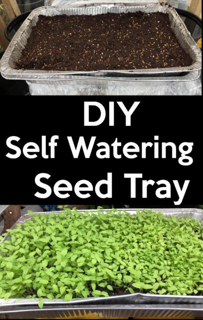 diy self watering seed tray
