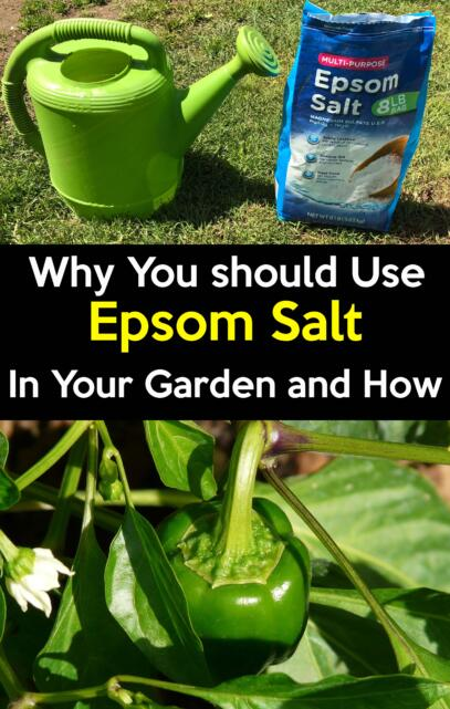 why you should use Epsom salt in your garden