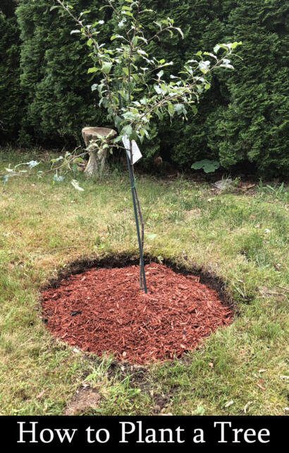 how to plant trees