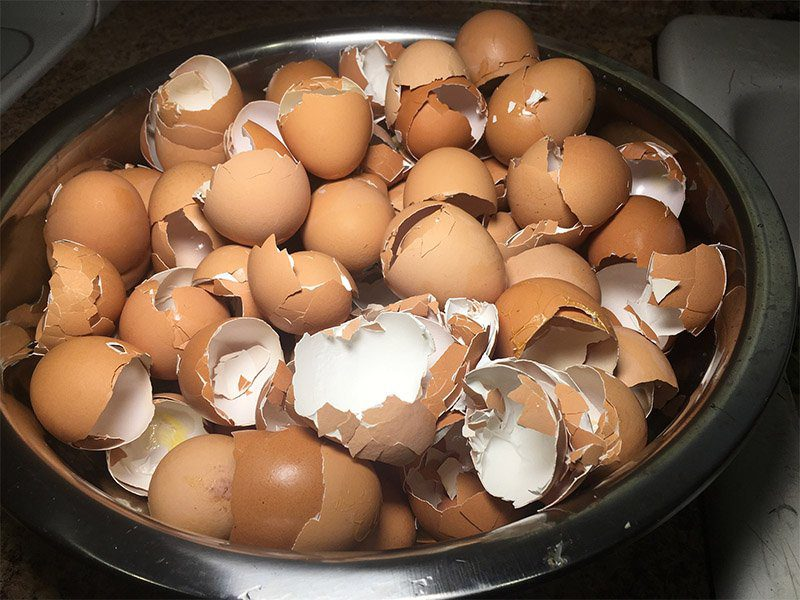 use egg shells in the garden