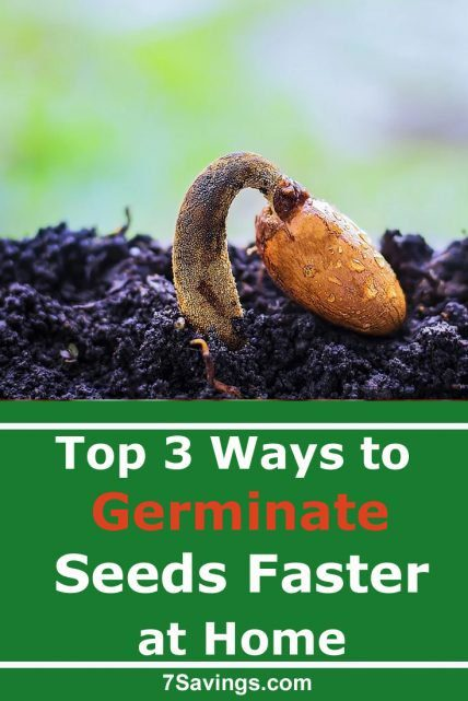 How to germinate seeds faster