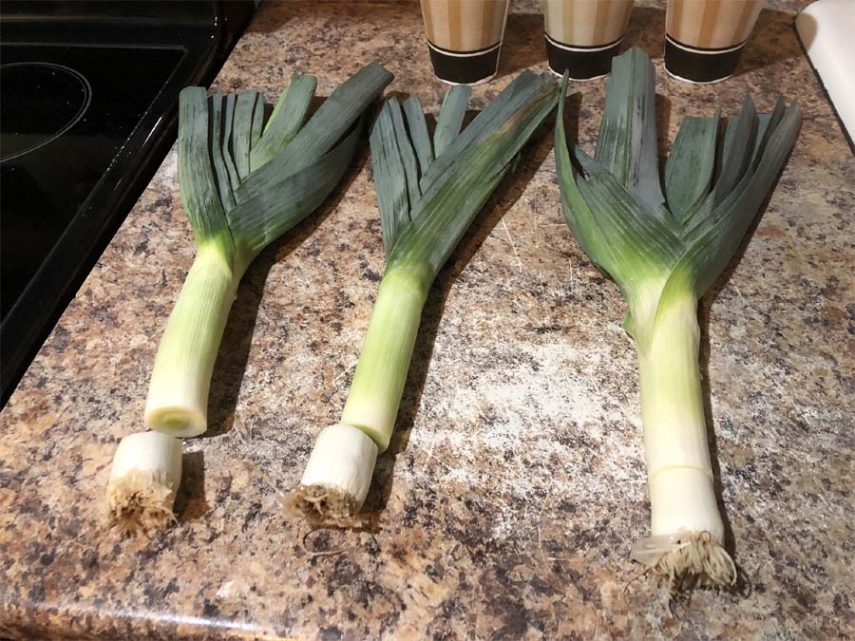 How to regrow leeks