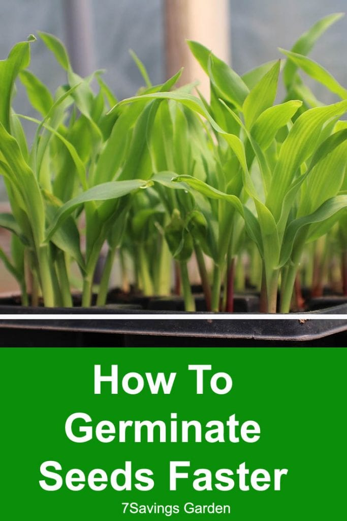 how to germinate tiny seeds faster